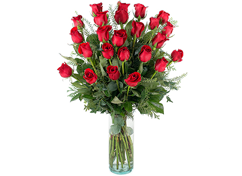 24 rosas rojas de tallo largo