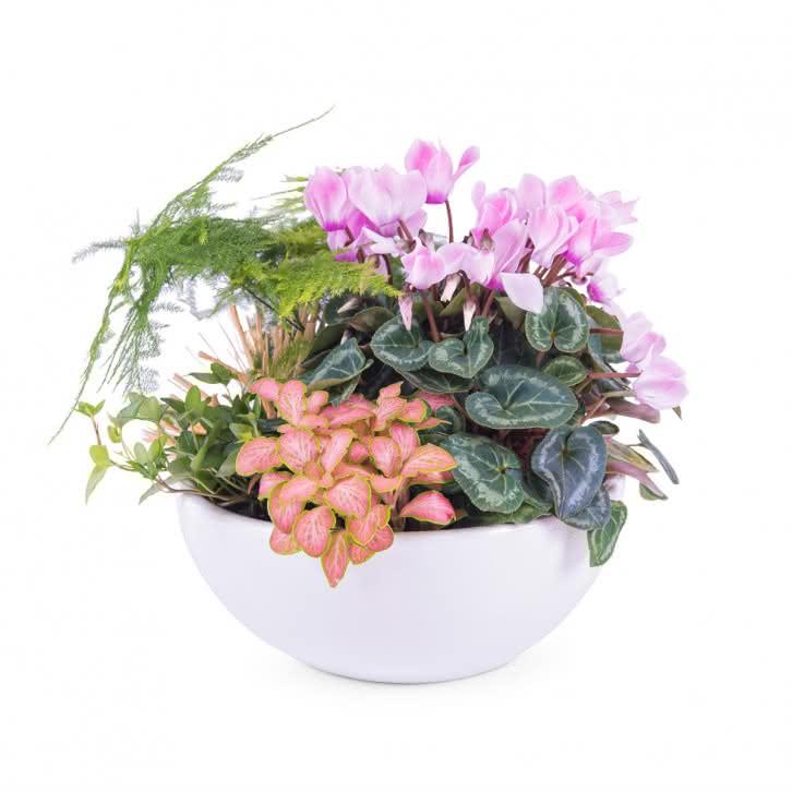 plantas cestas centro de plantas variado interflora