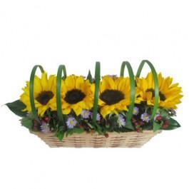 Sunflower Sensation, Sunflower Sensation