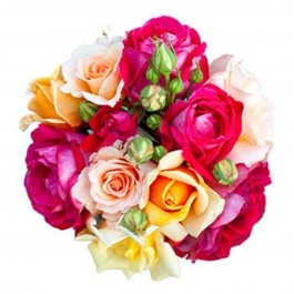 Dream of roses, Dream of roses
