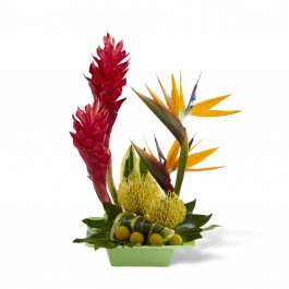 Exotica Arrangement, BB#C21-4873 Exotica Arrangement