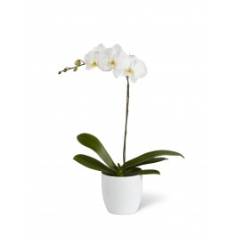 White Orchid Planter, BB#S11-4462 White Orchid Planter