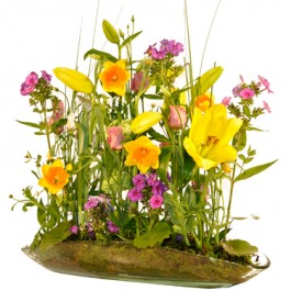 Primavera, BG#Primavera Primavera