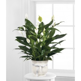 The FTD Comfort Planter, CA#CPP The FTD Comfort Planter