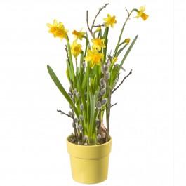 Bonjour le printemps!, CH#CHN50039 Bonjour le printemps!