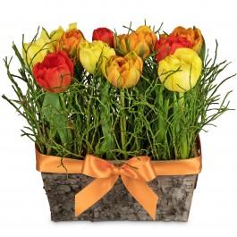 Happy tulip meadow, Happy tulip meadow
