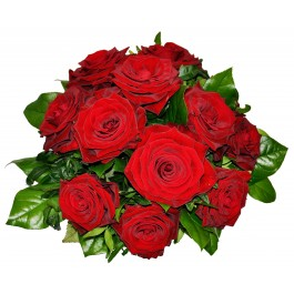 Tantalizing 12 Roses, Tantalizing 12 Roses