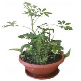 Composición vegetal, DZ#DZ1B9 Composición vegetal