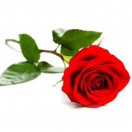 Rosa individual, EE#SGRR Rosa individual