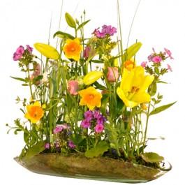 Primavera, ET#ACFET109 Primavera