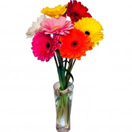 Colorful bouquet of gerberas, Colorful bouquet of gerberas