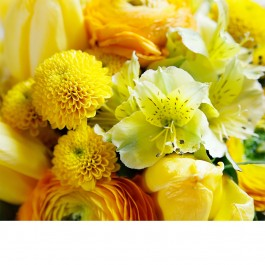 Florist's Choice in yellow, Florist's Choice in yellow