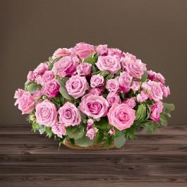 Rosae rose, Rosae rose