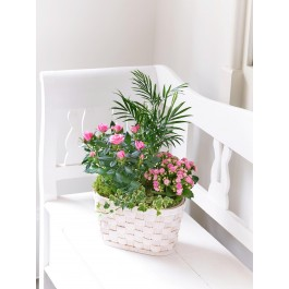 MIXED PLANTED BASKET, MIXED PLANTED BASKET