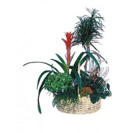 Composición vegetal, HR#903 Composición vegetal