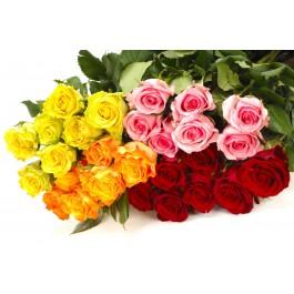 Rosas / Selección de colores (sin jarrón), Rosas / Selección de colores (sin jarrón)