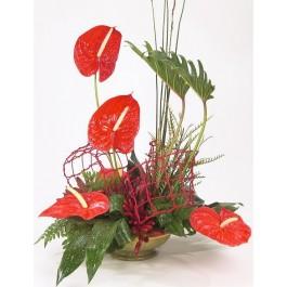 Red Anthurium, IL#512 Red Anthurium