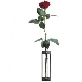 Rosa individual, IS#SGRR Rosa individual