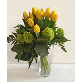 Tulipani gialli, IT#BM051 Tulipani gialli