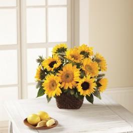 FTD Perfect Sun Bouquet, FTD Perfect Sun Bouquet