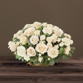 Rosae blanc, Rosae blanc