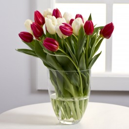 Bouquet of tulips in red and white colours, Bouquet of tulips in red and white colours