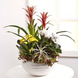 Arrangement of Plants, LV#EE503 Arrangement of Plants