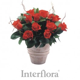 Red roses arrangement (pottery vase included), Red roses arrangement (pottery vase included)