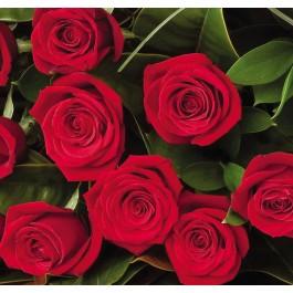12 rosas de tallo medio, NZ#12RM 12 rosas de tallo medio