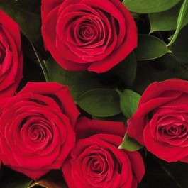 6 rosas de tallo large, NZ#6RL 6 rosas de tallo large