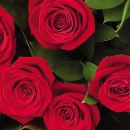 6 rosas de tallo medio, NZ#6RM 6 rosas de tallo medio