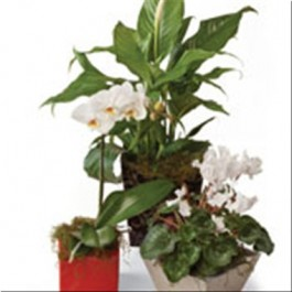 Seasonal Plants, NZ#SG431 Seasonal Plants