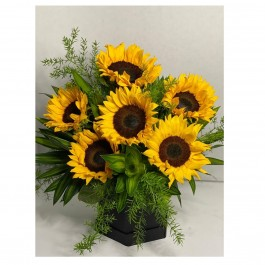 6 Sunflowers in a box, 6 Sunflowers in a box
