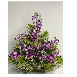 Special Orchids extra large, Special Orchids extra large