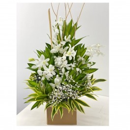 Special orchid box (white), Special orchid box (white)