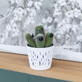 Cactus Mix M-13, Los Cactus agradecen estar a semisombra en ambientes luminosos.