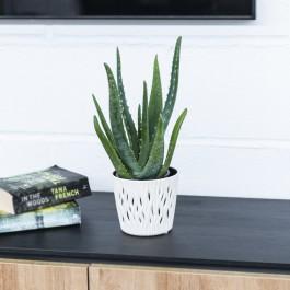 Aloe Vera Bio 12, Aloe Vera, un remedio natural contra cualquier quemadura o herida.