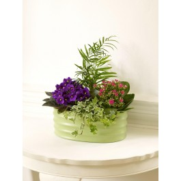 FLORIST CHOICE PLANT ARRANGEMENT, FLORIST CHOICE PLANT ARRANGEMENT