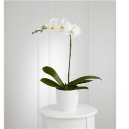 White Orchid Planter, White Orchid Planter