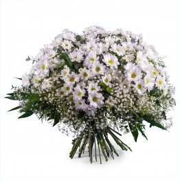 Bouquet of White Margaritte Daisies, Bouquet of White Margaritte Daisies