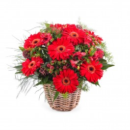 Basket Arrangement of Gerbera Daisies, Basket Arrangement of Gerbera Daisies