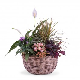 Centrepiece of Mixed Plants , Centrepiece of Mixed Plants
