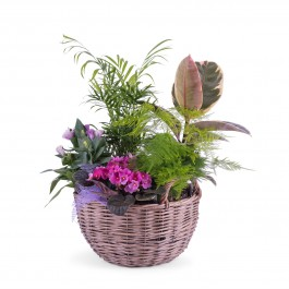 Centrepiece of Plants, Centrepiece of Plants