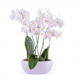 Centrepiece of white Phalaenopsis plants, Centrepiece of white Phalaenopsis plants