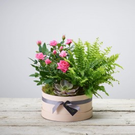 FLORIST CHOICE PLANT ARRANGEMENT, FLORIST CHOICE PLANT ARRANGEMENT