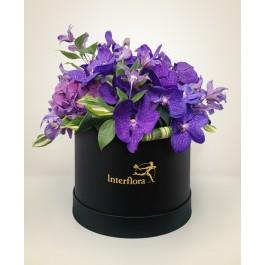 Purple Box, Purple Box