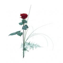 Single flower - Red rose, SE#1205004 Single flower - Red rose