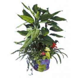 Arreglo de plantas, SG#2605 Arreglo de plantas