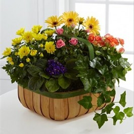 Gentle Blossoms Basket, SV#S36-4524 Gentle Blossoms Basket