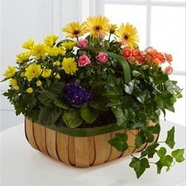 Gentle Blossoms Basket, SV#S36-4524 Gentle Blossoms Basket